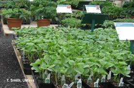 vegetable bedding plant production and pest management center