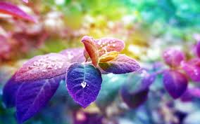 colorful wisteria wallpapers hd desktop wallpapers 4k hd