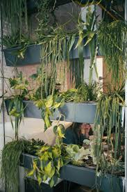 Houseplants 262 Best Kasvikuvia Houseplants Images On Pinterest Indoor