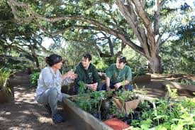 ornamental horticulture ornh monterey peninsula college