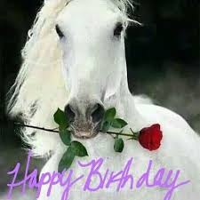Horse Birthday Meme - pin by amy connolley on horse birthday quotes pinterest