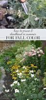 pruning deadheading summer fall color