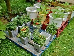fresh container vegetable gardening in alaska 6102