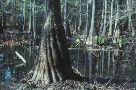 Louisiana vegetaion images Types of wetlands jpg