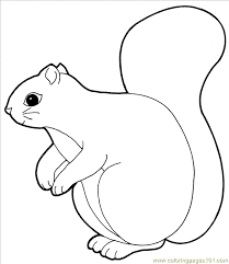 squirrels colouring pages 2 coloring
