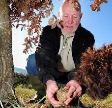 chambre d agriculture agen agen la truffe invitée à la chambre d agriculture 14 01 2012