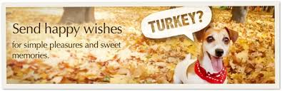 thanksgiving ecards send thanksgiving cards at american