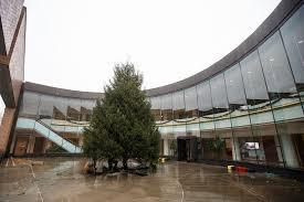 order crews cut install 35 foot tree for city