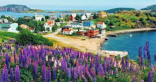 cute towns 10 cute towns in newfoundland that are definitely worth the road