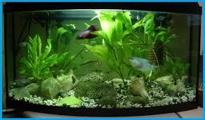cuisine aquarium design ideas archives modern aquarium design for