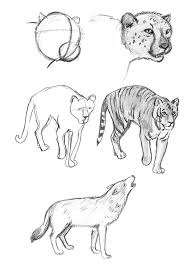 animal pencil sketches u0026 finished work on behance