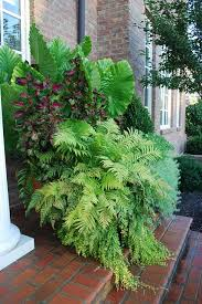 Tropical Potted Plants Outdoor - 54 best container gardening images on pinterest garden ideas