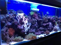 Reef Aquascape Designs Can I Aquascape A 55 Gallon Tank For Corals If It Is Only 13