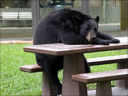 sad depressed bear daily picks and flicks