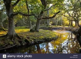 New Hampshire national parks images Forest river at ober water new forest national park hampshire jpg