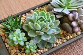 Indoor Plant Arrangements Succulent Arrangement Ideas Handcrafted Succulent Arrangements