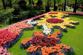 flower garden in holland layla wijsmuller