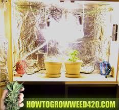 best light to grow pot best indoor grow lights how to grow weed