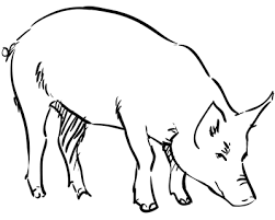 how to draw a pig step by step tutorials pinterest pigs how