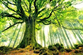roots tree services