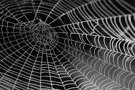 halloween spider webbing transparent background spider web free stock photo