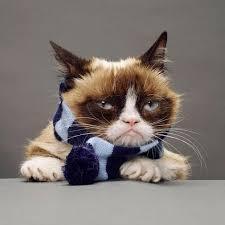 Meme Generator Grumpy Cat - grumpy cat scarf meme generator