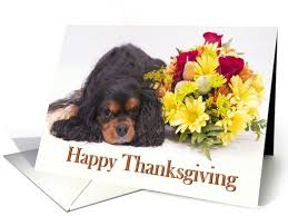 happy thanksgiving cavalier king charles spaniel card 967503