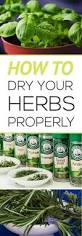 9 all natural ways to keep pests out of your garden gardening