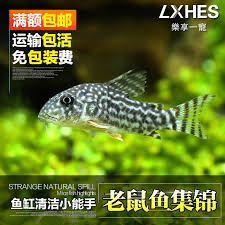 china best mice china best mice shopping guide at alibaba