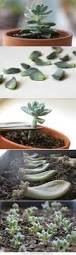 Our Favorite Plants How To by 30 Best Plants Images On Pinterest Gardening Plants And Landscaping