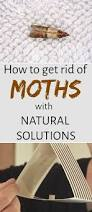 Moths In Kitchen Cabinets How To Get Rid Of Moths With Natural Solutions