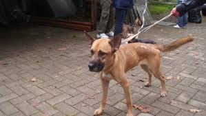 cani in cerca di casa adozioni cani su petsblog