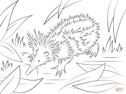 hedgehog coloring pages free coloring pages