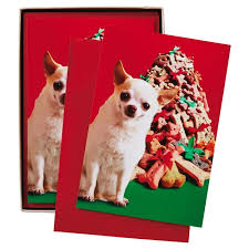 chihuahua all your wishes funny christmas cards box of 16 boxed
