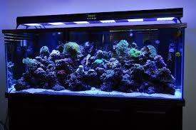 different types of aquariums different types of aquarium fish