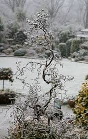 33 best images about winter gardening on pinterest