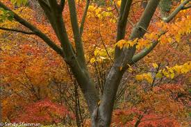 california fall foliage u2013 reports locations natural history