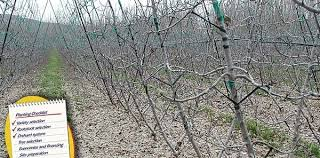 Trellis System Choosing An Orchard System And Density Good Fruit Grower