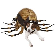 Halloween Costumes Girls 13 Halloween Dog Costume Ideas 32 Easy Cute Costumes