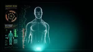 Male Anatomy Video Anatomy Of Human Full Body Male Walking On Left With Touch Screen