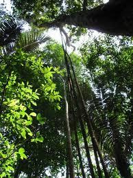 canopy amazon amazon canopy photo