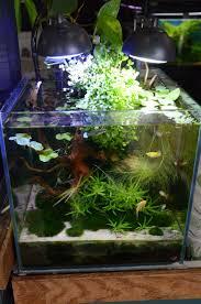 native aquarium plants best 25 nano aquarium ideas on pinterest freshwater aquarium