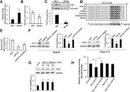 elevated hepatic mir 22 3p expression impairs gluconeogenesis by