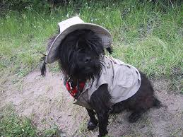 affenpinscher judging list for an afternoon of fly fishing photo by okpenstemon