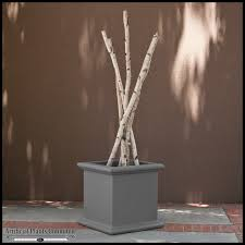 Decorative Birch Branches in Planter