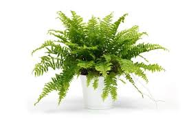 8 Houseplants That Can Survive by 8 U0027shower Plants U0027 That Want To Live In Your Bathroom Treehugger