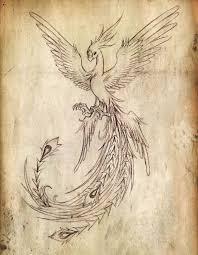 best 25 phoenix drawing ideas on pinterest tattoo pheonix