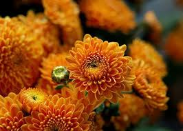 colorful decorating fall flowers inspiring fall