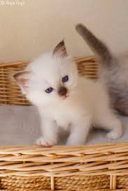 3526 best kittens are cute too images on pinterest kitty cats
