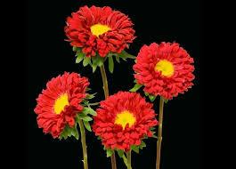 fresh flowers in bulk 530 best shop for wholesale bulk fresh flowers images on